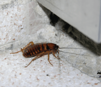10 facts you did not know about cockroaches