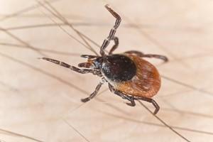 Outdoor Terrace Pest Control