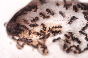Stop ants from invading your cabinets